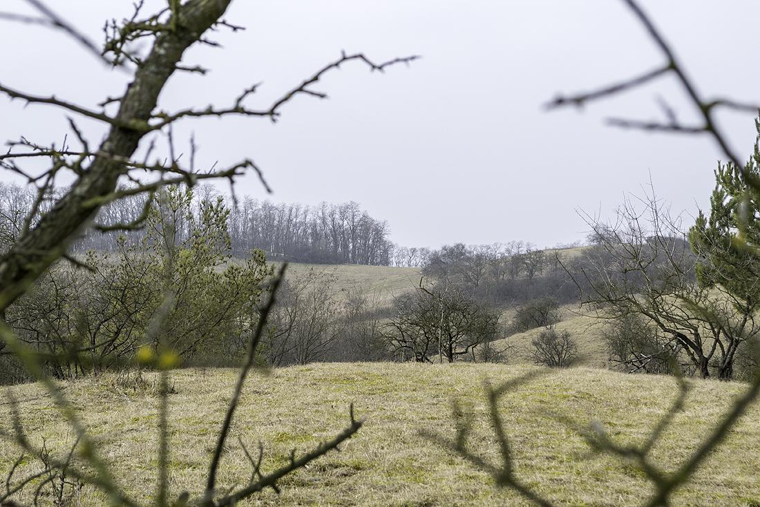 Hüglig, kleine Wäldchen, Baumgruppen und Buschreihen. So zeigen sich die östlichen Ausläufer der Höhen am Schlachtfeld.