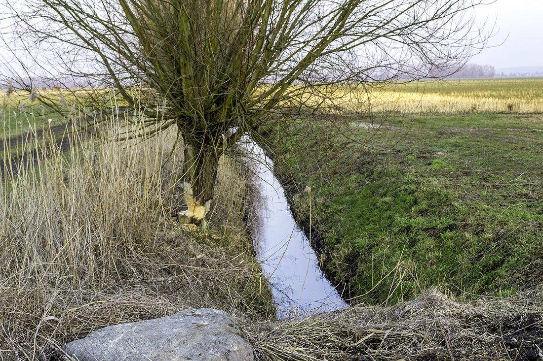 Einer der zahlreichen Wassergräben. Noch heute auf dem alten Schlachtfeld an der Oder zu finden.
